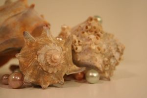 Pearls and Shells I by alunajoy