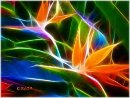 Birds of  Paradise by KLR620