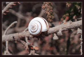 a Snaily one by KeReN-R