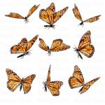 Butterfly Stock 13 by Shoofly-Stock