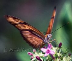 Just an Orange Butterfly by Marmaluke