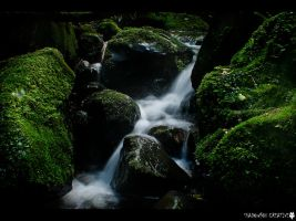 Nichols Creek by shadowfoxcreative