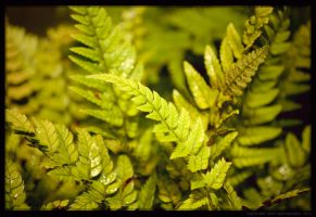Day 325 Fern by Sato-photography