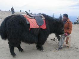 Black DoDo YAK by sunnyjain