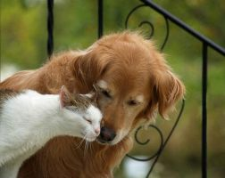 21-adorable-cat-and-dog-photography-04 by Foomey