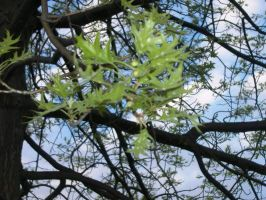 Branches two by Nick-n-Steve-Stock