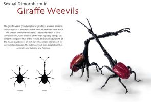 Fighting Giraffe Weevils by bigredsharks