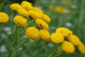 Tansy and the Ant by creativsis