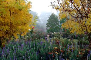 Misty Morning Friend's Garden by xjames7