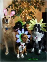 Easter dogs by Steven-Becker