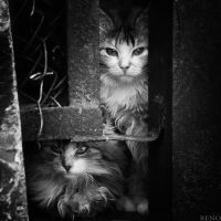 Cat by RENOPHOTO