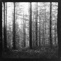 black forest in black and white - 3 by VooDooMania