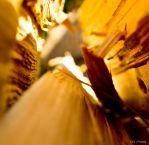 Wooden Canyon by DiHydrogenO
