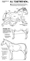 Horse Anatomy Part III - All Together Now by sketcherjak