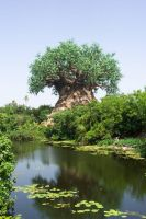 Tree on the Limpopo River by Kyoko-Zelch