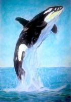 Killer Whale by TypoBag