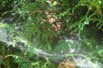 Web in Bush 2 by RosalineStock