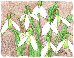 Snowdrops by Sphinx47