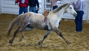 STOCK 2013 Rodeo-159 by fillyrox