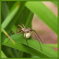 spider by Aville