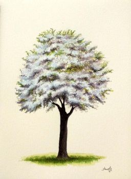 Cherry Tree by aakritiarts
