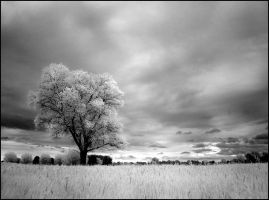 Home Tree III infrared... by MichiLauke