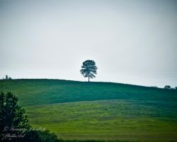 one tree two by Tommy8250