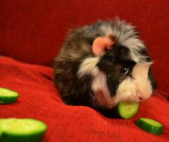 Monty: Cumber Time! by Enceys