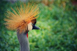 Crown Crane - Edited 4 by lostreality91