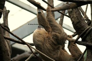 Sloth by crownvic4life
