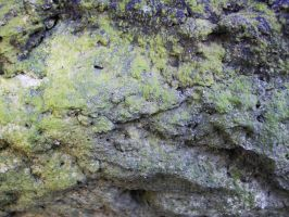 Background : Moss on the stone by hikaru072