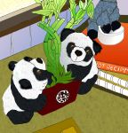 Lucky Bamboo pandas dont eat carrots by merearthling