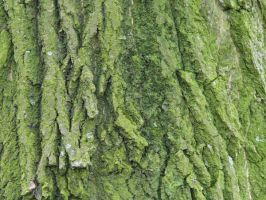 wood_texture_12 by pebe1234