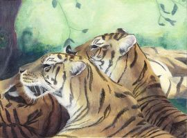 Tigers by BreaghaDerryth