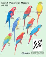 Extinct West Indian Macaws by RSNascimento