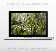 Morning dew wallpaper by marius-s