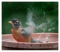 Just One More Bath by richardcgreen