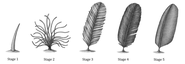 Feather Evolution