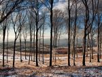 Winter woods by realityDream