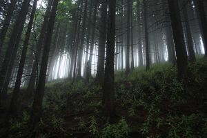 Moutain Forest by gawel22