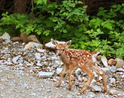 Bambi by Whosle