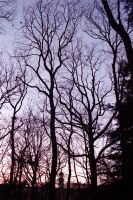 Trees In The Night by WanderingSoul-Stox