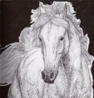 Horse Drawing by lorni3