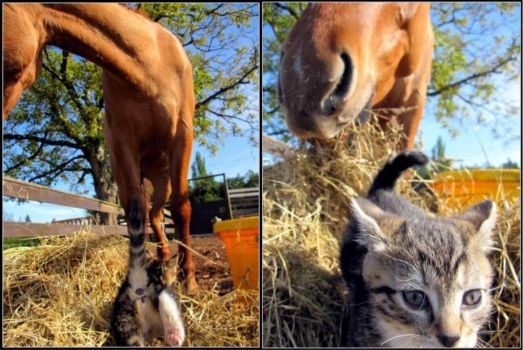 Curiosity and the Kittens by samspot8r8s
