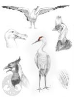 Animal Anatomy sketches - 3 by KatieHofgard