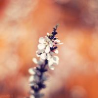 Faith by solefield