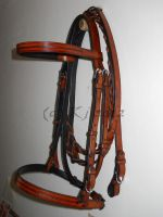 Finished : Bridle For Scottie by nypd