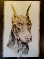 Doberman pinscher - Wood burning by brandojones