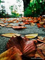 Tipical autumn by DianaVVolf