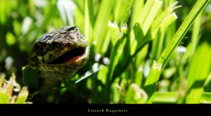 Smiling Lizzard by Sleeplessxsummer